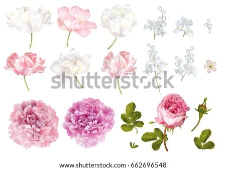 vector flower elements set