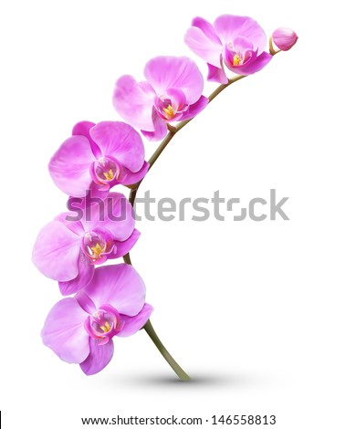 vector flower exotic orchid