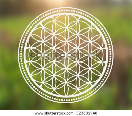 vector flower of life symbol on