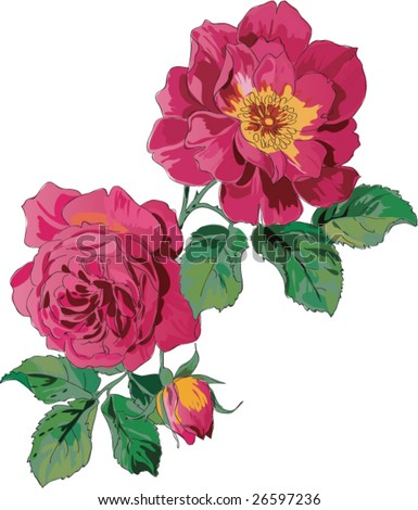 vector flower rose