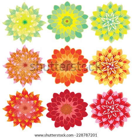 vector flowers dahlia colorful