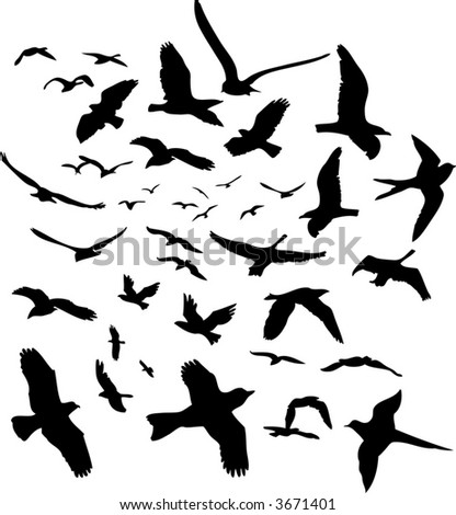vector flying birds