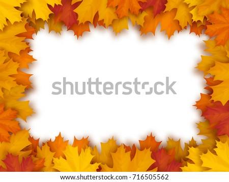 vector frame of fallen maple