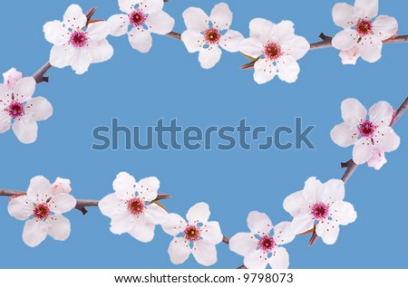 vector frame spring background