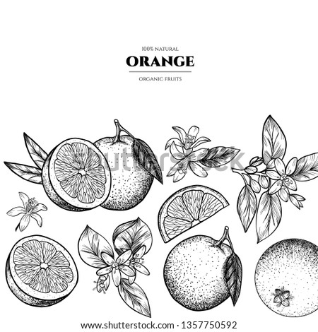 Vector frame with oranges and flowers .Hand drawn. Vintage style