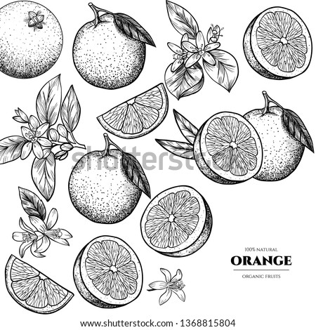 vector frame with oranges and