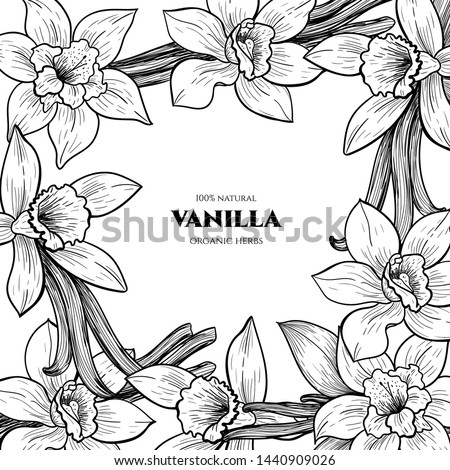 Vector frame with vanilla flowers and pods. Hand drawn. Vintage style #1440909026