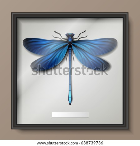 vector framed realistic blue