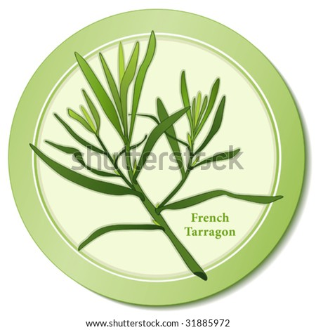 vector - Fresh French Tarragon: Aromatic perennial herb with lance-shaped leaves used in cooking, herb vinegars,  Fines Herbes. Copy space. EPS8 organized in groups for easy editing.