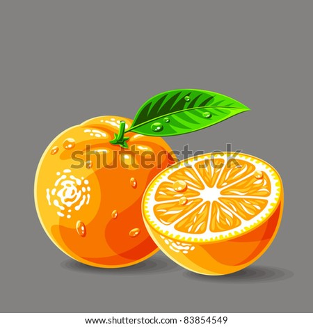 Vector fresh oranges with water drops. Vector illustration. - stock vector