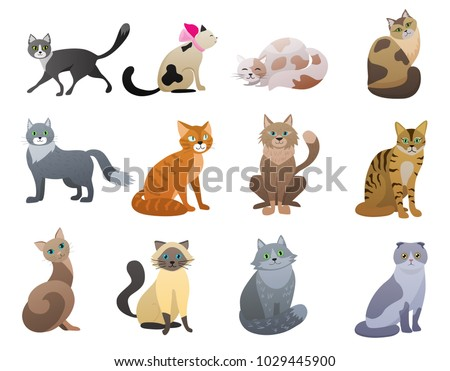 stock-vector-vector-funny-and-cute-cartoon-cat-different-breeds-pet-characters-set