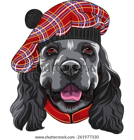 vector funny smiling dog American Cocker Spaniel in red Scottish Tam Zdjęcia stock ©