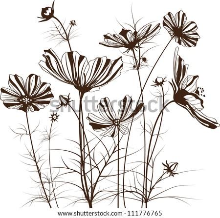 vector garden flowers  cosmos