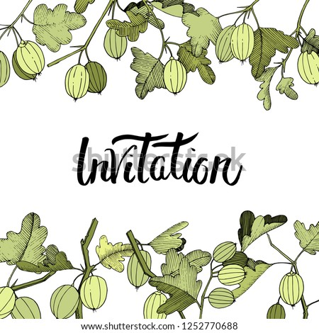 Vector Gooseberry branch. Green leaf. Plant botanical garden floral foliage. Floral border. Invitation handwriting monogram calligraphy. Engraved ink art.