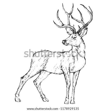 Vector Graphic animal boho illustration - black and white isolated deer for wedding, anniversary, birthday, invitations, logo, baby shower, etc.