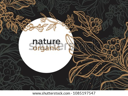 Vector graphic coffee tree plantation, branch, leaf, bean. Vintage hand drawn template, tropic background, nightly jungle, sketch foliage. Aroma rich drink Decorative retro design, print, card, banner