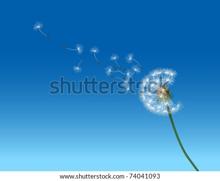 vector graphic illustration depicting dandelion seed dispersal