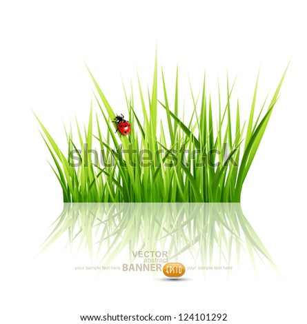 vector grass with ladybird