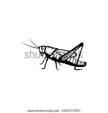 vector grasshopper illustration