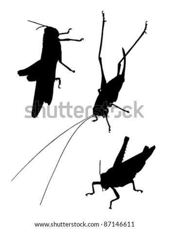 vector grasshopper silhouettes on white background