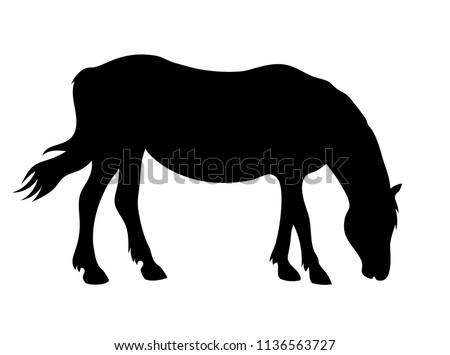 vector grazing horse silhouette