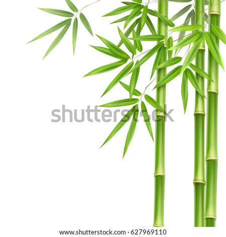 vector green bamboo stems and