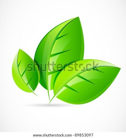 Vector green leaf concept