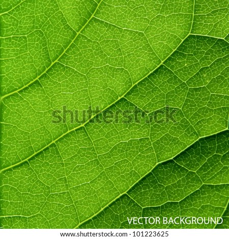 vector green leaf macro