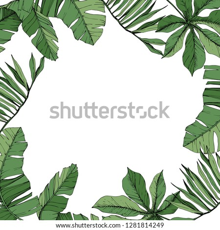 Vector Green leaf plant botanical garden floral foliage. Engraved ink art. Exotic tropical hawaiian summer. Palm beach tree leaves jungle botanical. Frame border ornament square.