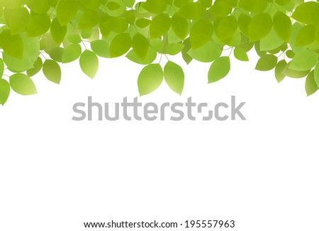vector green leaves on top on