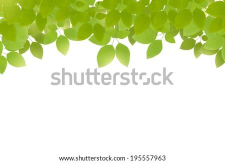 vector green leaves on white