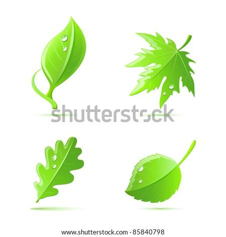 vector green leaves set