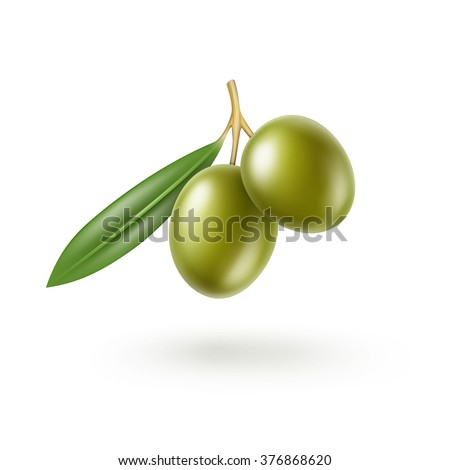 vector green olives branch with