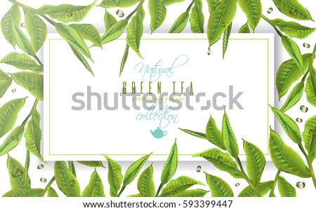 Vector green tea horizontal banner with tea leaves and drops on white background. Design for packaging, tea shop, drink menu, natural cosmetics, homeopathy, health care products. With place for text