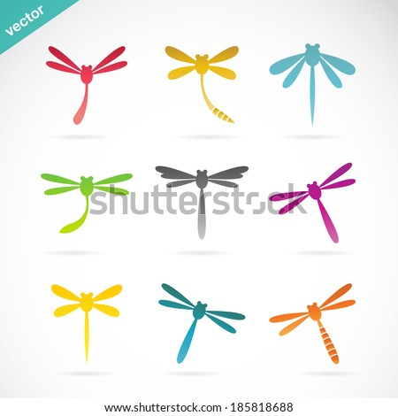 vector group of dragonfly on