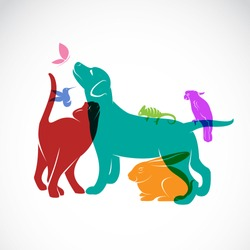 Vector group of pets - Dog, cat, parrot, chameleon, rabbit, butterfly, hummingbird isolated on white background, Vector pets for your design.