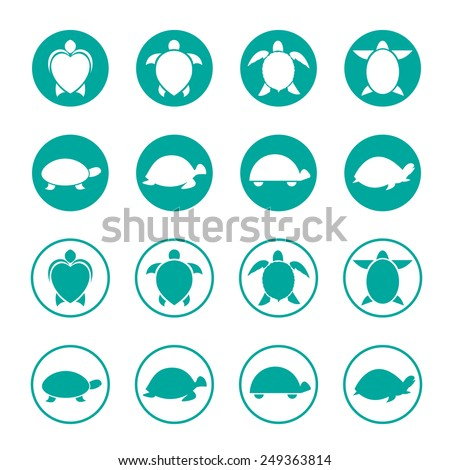 vector group of turtle in the