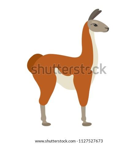 Vector guanaco in flat style. Cute and simple cartoon lama.