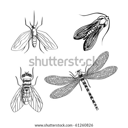 Vector hand draw insects