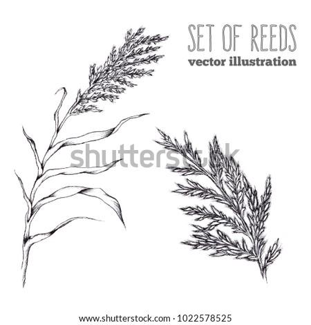 vector hand draw sketch set