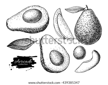 Vector hand drawn avocado set. Whole avocado, sliced pieces, half, leaf and seed sketch. Tropical summer fruit engraved style illustration. Detailed food drawing. Great for label, poster, print