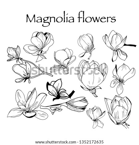 Vector hand drawn Collection of magnolia flower and leaves, sketch illustration. Can use for pattern, logo, template, banner, posters, invitation and greeting card design #1352172635