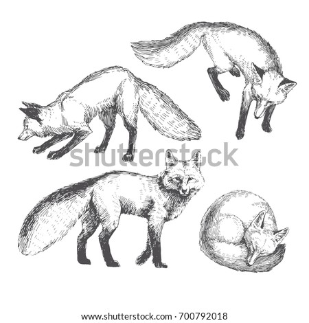Vector hand drawn cute animal set. Sketch illustration with walking, playing and sleeping foxes.
