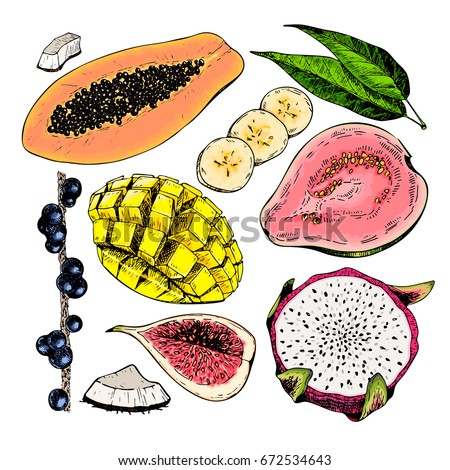 vector hand drawn exotic fruits