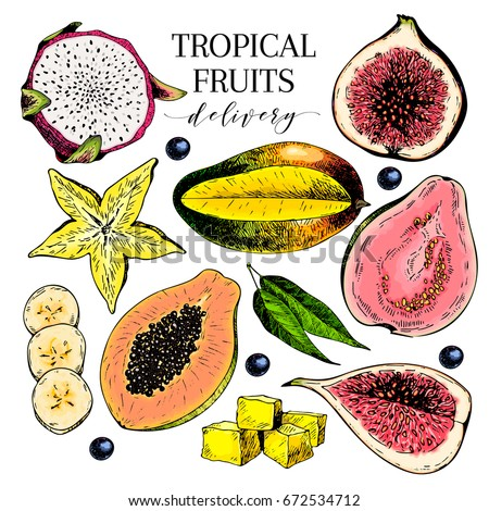 vector hand drawn exotic fruits