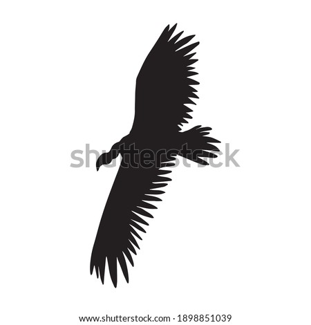 Vector hand drawn flying griffon vulture bird silhouette isolated on white background Foto stock ©