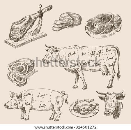 vector hand drawn food sketch