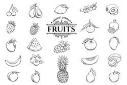Vector hand drawn fruits icons set. Decorative retro style collection farm product restaurant menu, market label.
