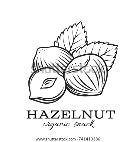 vector hand drawn hazelnut for