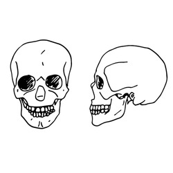 Vector hand drawn illustration of a human skull in two proections. Sketch. Medical illustration of a skeletal system